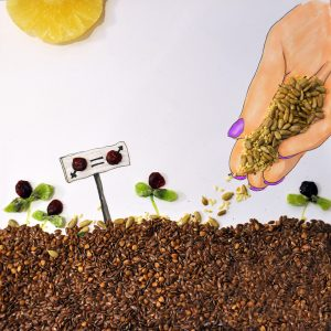 food art illustration with Strauss group for 2017 international women's day and the jewish holiday - Tu Beshvat: sweing the seeds to equality